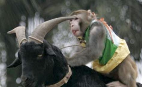 new year monkey and goat monkey in year of the goat autos post