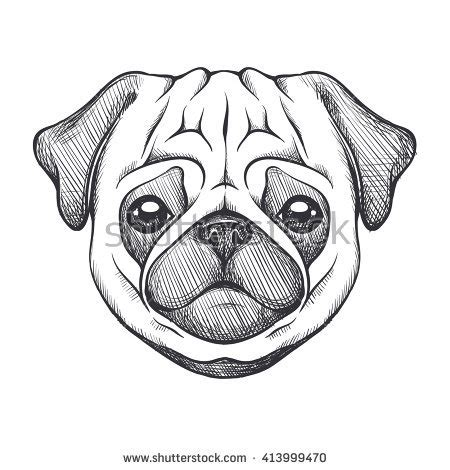 pug sketches pug portrait of in sketch style vector illustration black and