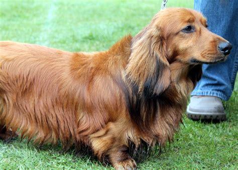 companion dogs companion show
