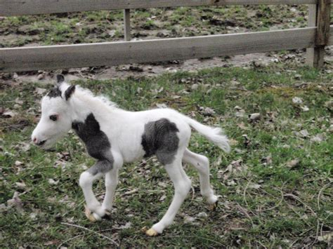 mini pony mini pony baby images