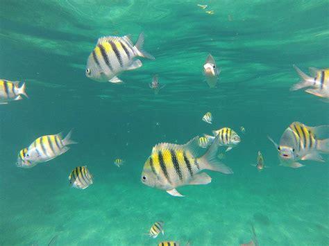 catamaran snorkeling montego bay jamaica snorkeling in montego bay with dressel divers