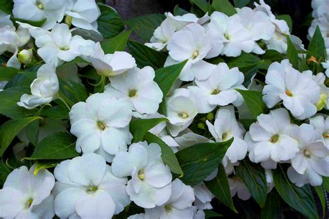 Pflanzen Volle Sonne Vertragen by Blumen Die Sonne Vertragen Blumen Die Nicht Viel Licht