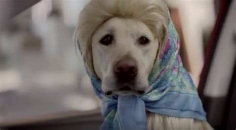 subaru commercial with golden retrievers home national purebred day 174