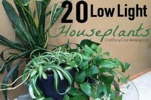 Houseplants For Low Light by 20 Low Light Houseplants