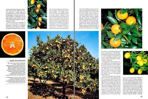 come curare il limone in vaso coltivazione agrumi in vaso