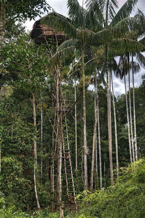 korowai tree houses the tree houses of the korowai tribe of new guinea what