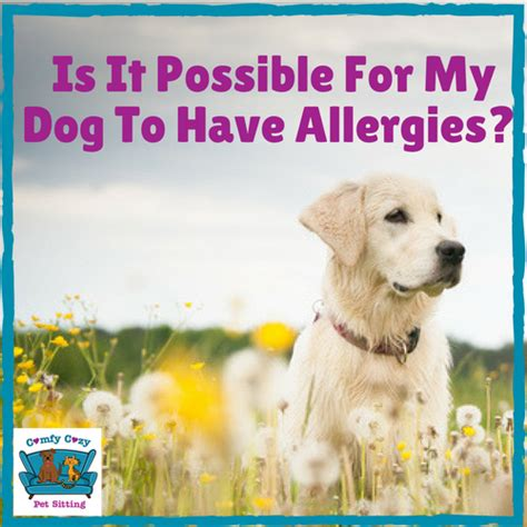 has allergies is it possible for my to allergies comfy cozy pet sitting