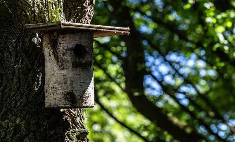 vogelhaus aus baumstamm bauen anleitung tipps