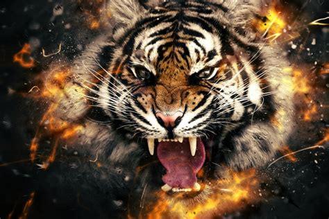 abstract tiger wallpaper tiger roaring face abstract wallpaper best hd wallpapers