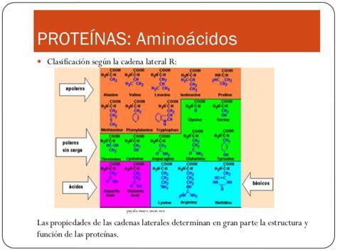 clasificacion de los aminoacidos segun sus cadenas laterales prote 237 nas