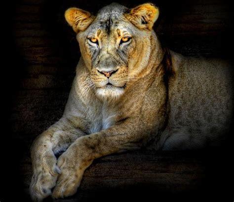 imagenes animales bellos fotos de animales bellos imagui