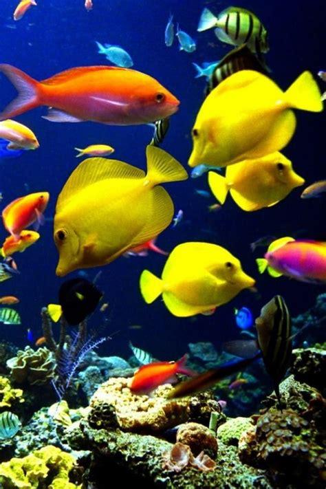 fish colors best 25 tropical fish ideas on fish colorful