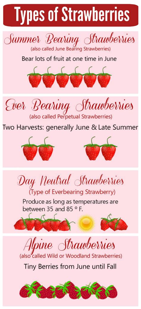 types of growing strawberries tips and tricks for best success