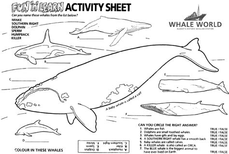 pages and activities whale unit activity sheets coloring sheets