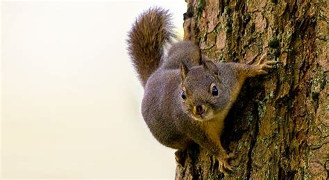 top 28 how do squirrels live in the forest how