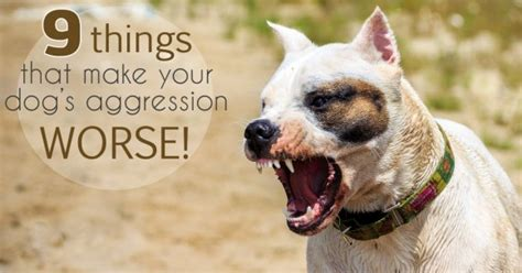 my puppy is aggressive 9 factors your s aggresion worse thedogtrainingsecret