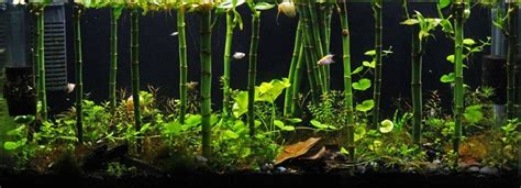 Bamboo Aquascape by Bamboo Forest Terrariums Aquariums And Paludariums