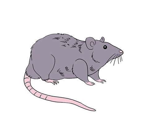 how to draw a rat step by step tutorial easy drawing