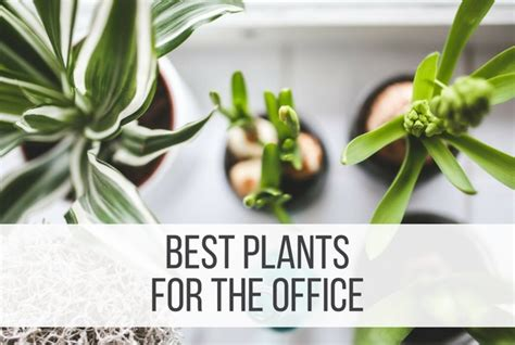 best plants for an office 12 best plants for the office punched clocks