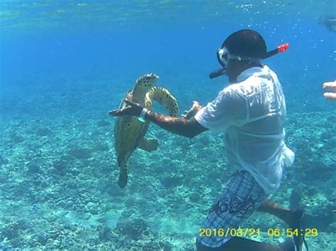 best snorkeling maldives snorkeling picture of heaven maldives huraa