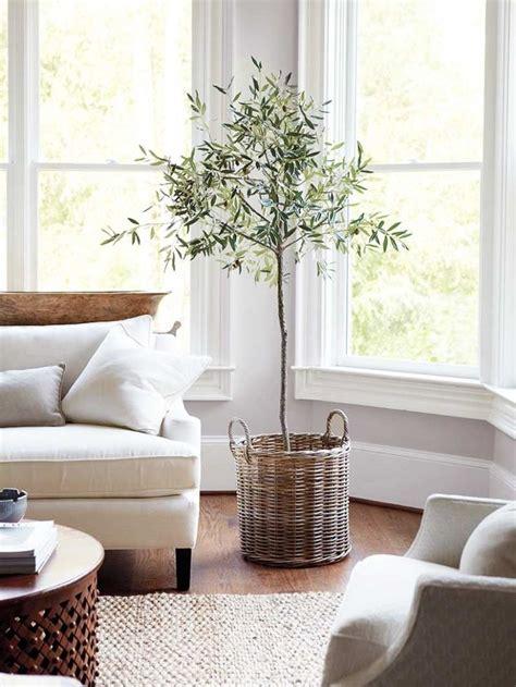 best 25 living room plants ideas on