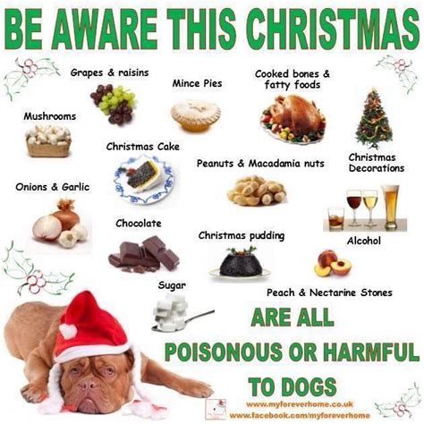 why do dogs always want food forbidden festive food for dogs toby s tails by susan