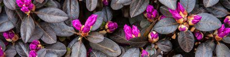 design new leaf landscaping