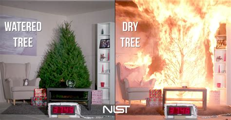 the importance of watering your christmas tree earth com