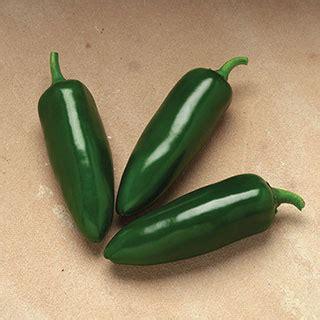 Jalapeno Pepper 10 Seeds 1 Pack Maica Leaf jalafuego hybrid pepper seeds from park seed