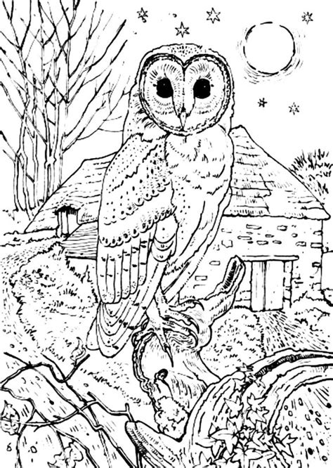 coloring page barn owl barn owl coloring pages for adults