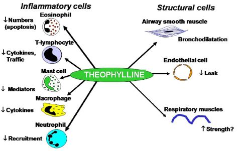 theophylline for dogs theophylline as a bronchodilator insomnia