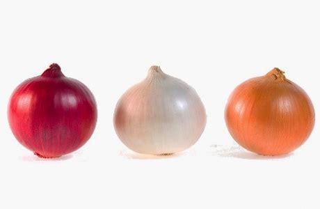 installations pour le tri des oignons oignons produits