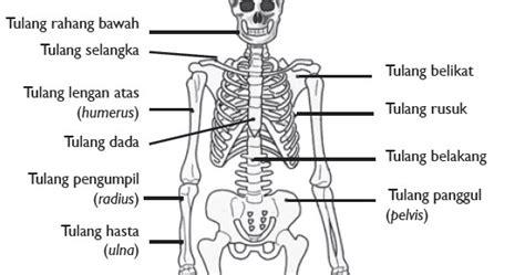 rangka manusia nama indonesia dianita kartika candra