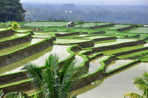 Beautiful Gardens In The World by Bali S Beautiful Rice Fields