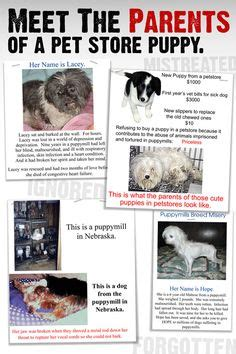 why are puppy mills bad puppy mills and backyard breeders on 141 pins