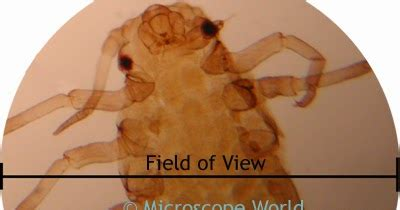 microscope world blog: how to calculate microscope field