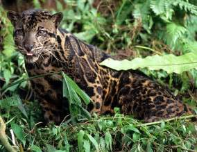 Tropical Rainforest Jaguar Tropical Rainforest Black Jaguar Tropical Rainforest