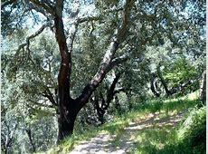Bosques de la Península Ibérica Lenguas De España