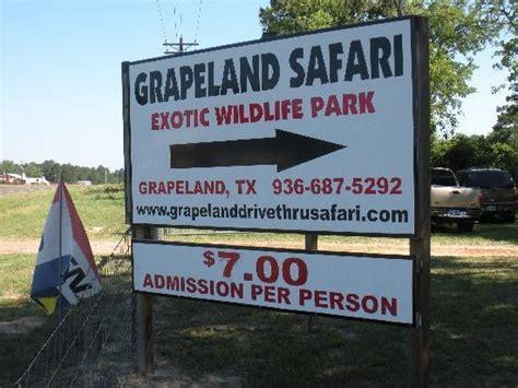 drive zoo texas grapeland safari grapeland tx been there zoo edition
