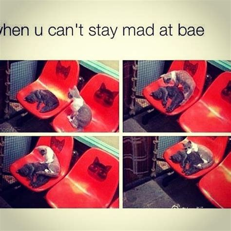 Stay Mad Meme - pinterest the world s catalog of ideas