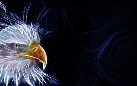 eagles background eagle backgrounds pictures wallpaper cave