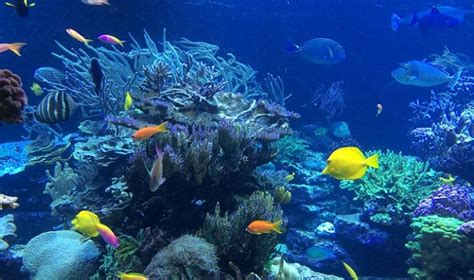 colors we can t see nemo and other reef fish can see colors we can t asian