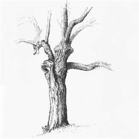b tree drawing tool trees drawings on behance
