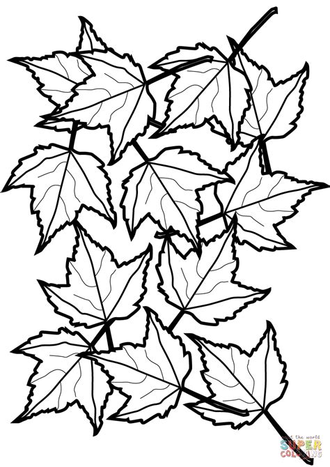 coloring page of a maple leaf autumn maple leaves coloring page free printable