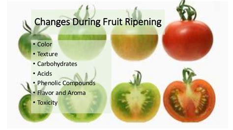 fruit ripening fruit ripening conditions