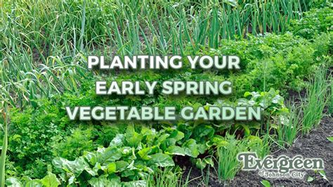 planting your early vegetable garden evergreen of