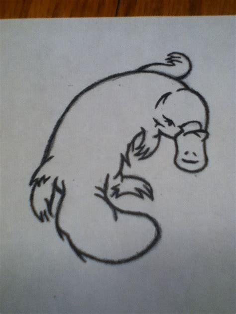 platypus tattoo platypus sketch by woodlol on deviantart