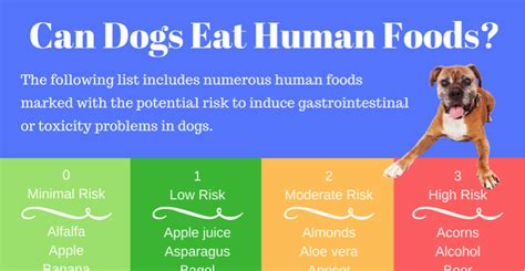 can puppies eat human food can dogs eat human food puppy smarts