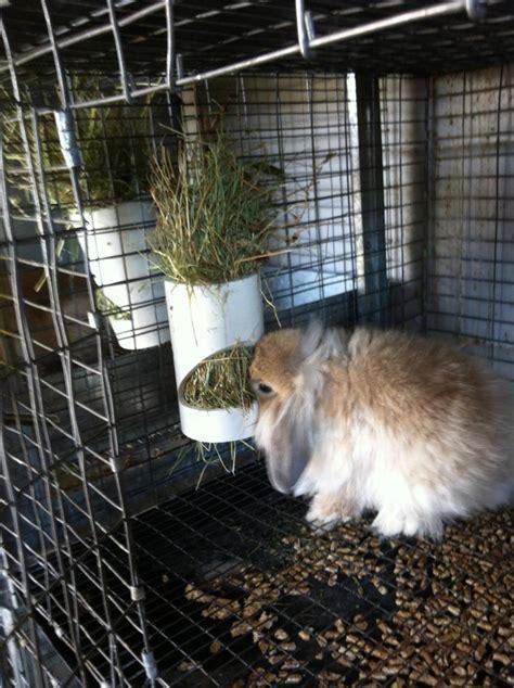 Bunny Hay Feeder honest desires farm chew resistant rabbit bowls um no