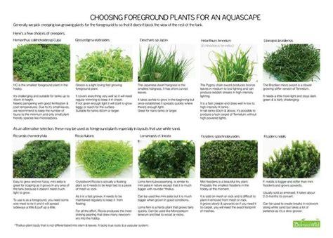 Aquascape Plants List by Aquatic Foreground Plants Aquascaping Nano Aquariums